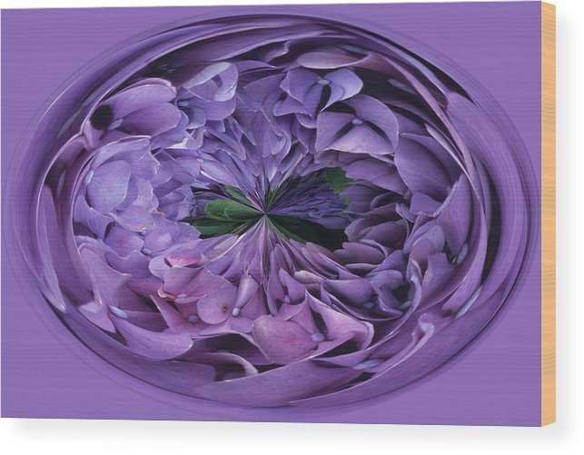 Abstract Wood Print featuring the photograph Hydrangea Abstract by Keith Gondron