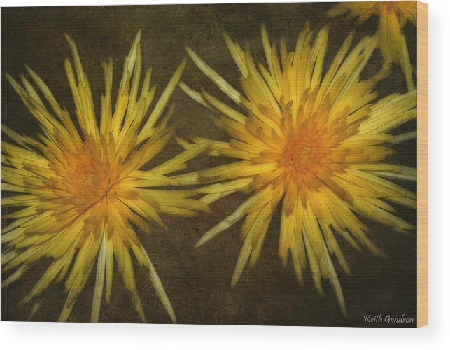 Flower Wood Print featuring the photograph Spider Lilies by Keith Gondron