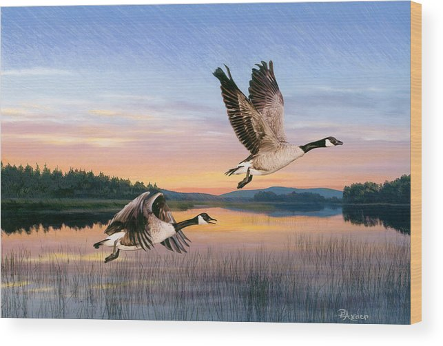Geese Wood Print featuring the drawing Taking Flight by Brent Ander