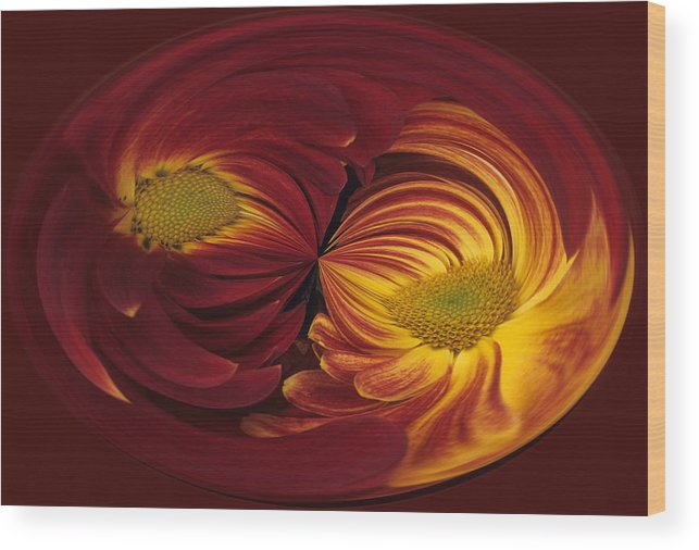 Abstract Wood Print featuring the photograph Twin Gerbera Abstract by Keith Gondron