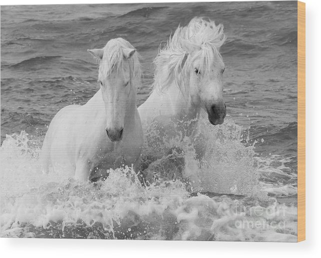 Horse Wood Print featuring the photograph Two White Horses in the Waves by Carol Walker