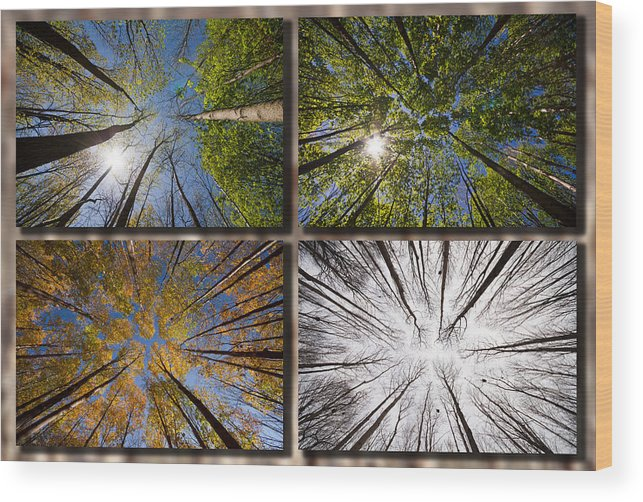 Four Seasons Forest Wood Print By Mircea Costina Photography