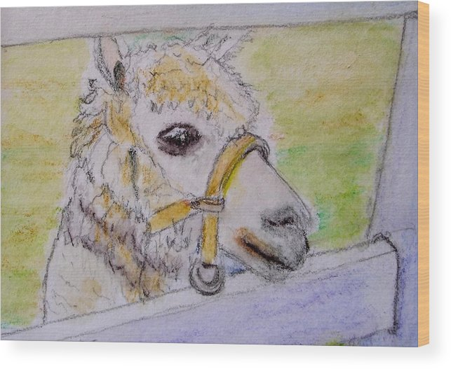 Baby Wood Print featuring the drawing Baby Llama by Lessandra Grimley