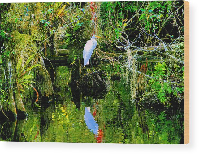 Everglades Wood Print featuring the painting Everglades Egret by David Lee Thompson