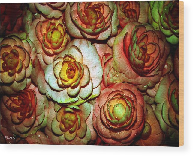 Roses Wood Print featuring the photograph Flowers by Ruben Flanagan