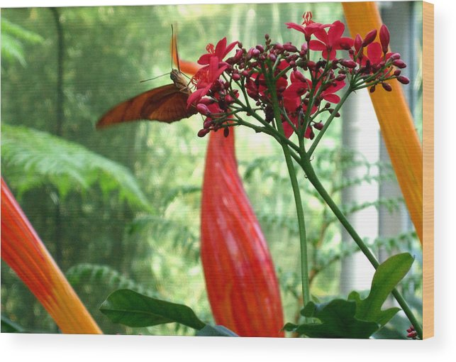 Butterfly Wood Print featuring the photograph Hanging Out by Mindy Newman