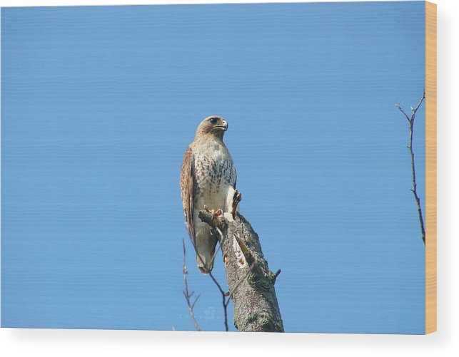 Wood Print featuring the photograph Majestic by Tony Umana