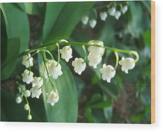 Flowers Florals Photo Nature Wood Print featuring the photograph Natures Bells by Lisa Roy