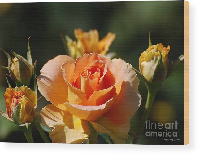 Flowers Wood Print featuring the photograph O range-ment by Larry Keahey