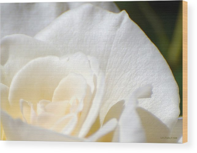 Flower Wood Print featuring the photograph Pure by Larry Keahey