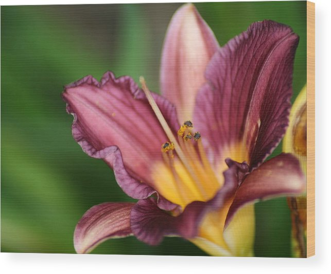 Floral Wood Print featuring the photograph Royalty by Marla McFall