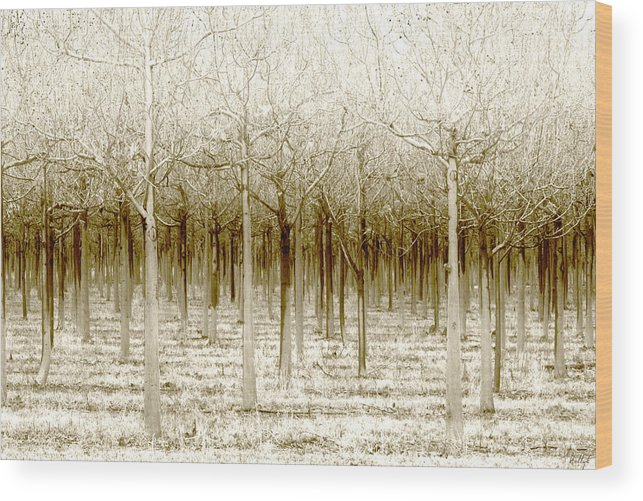 Landscape Wood Print featuring the photograph The Forest for the Trees by Holly Kempe