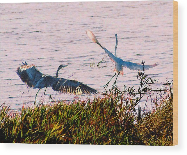 Wild Life Wood Print featuring the photograph The Heron and the Egret by Steve Karol