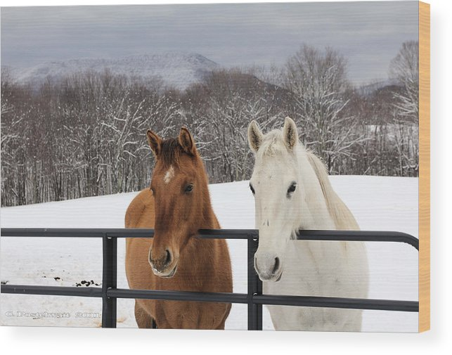 Snow Wood Print featuring the photograph Visiting by Carolyn Postelwait