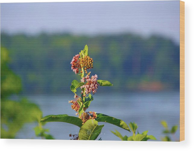 Wood Print featuring the photograph Wild Growth by Tony Umana