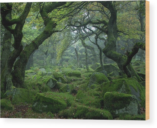 Tranquility Wood Print featuring the photograph Padley Gorge by Duncan Fawkes