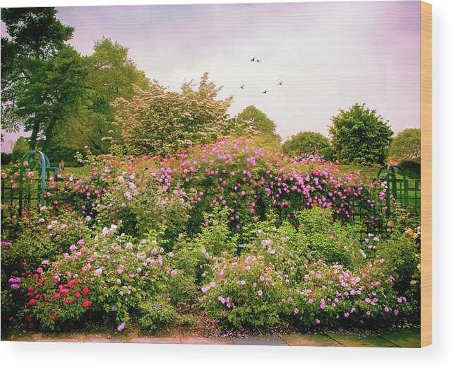 New York Botanical Garden Wood Print featuring the photograph Rose Garden Greeting by Jessica Jenney