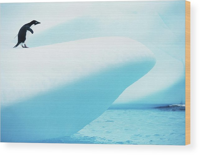The End Wood Print featuring the photograph Adelie Penguin Pygoscelis Adeliae by Paul Souders