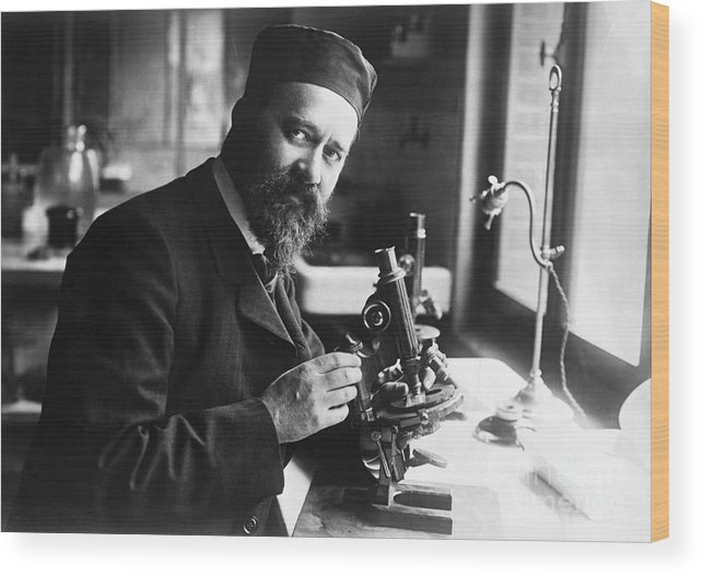 Microscope Wood Print featuring the photograph Albert Calmette Working With Microscope by Bettmann