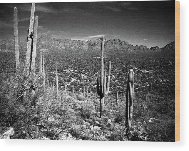 Saguaro Cactus Wood Print featuring the photograph Arizona, Tucson, Saguaro Np, Brown by James Denk