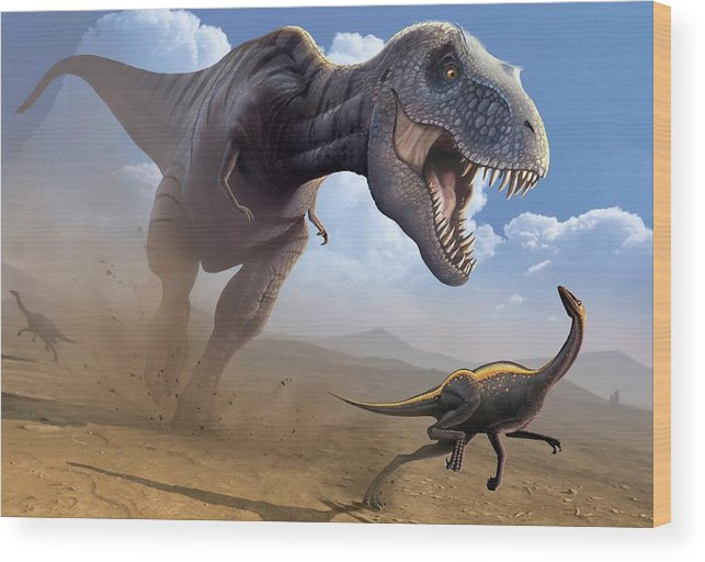 White Background Wood Print featuring the digital art Artwork Of A Tyrannosaurus Rex Hunting by Science Photo Library - Mark Garlick
