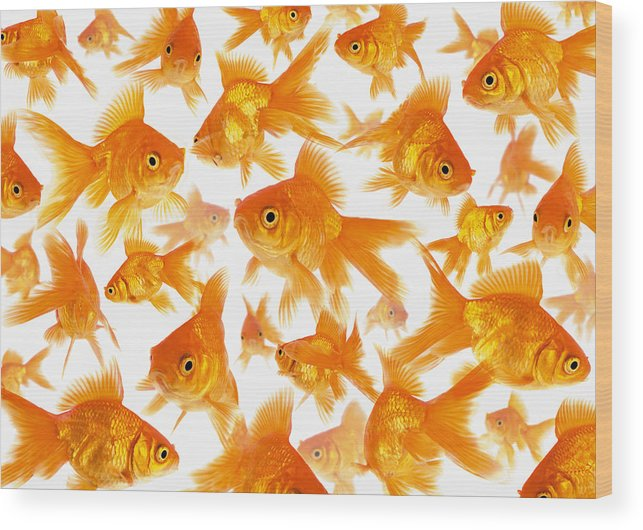 Orange Color Wood Print featuring the photograph Background Showing A Large Group Of by Cocoon