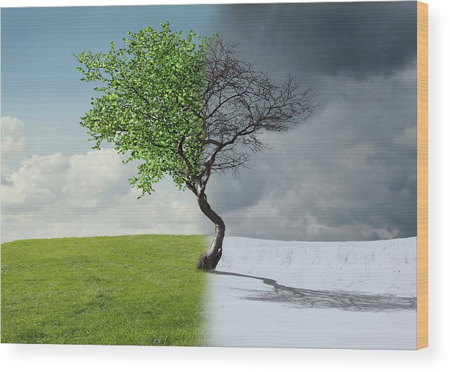 Snow Wood Print featuring the photograph Digital Illustration Of Half Winter by Chris Clor