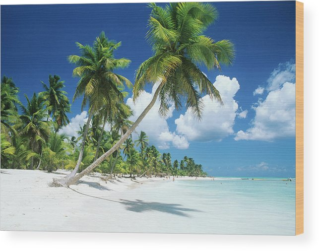 Scenics Wood Print featuring the photograph Dominican Republic, Saona Island, Palm by Stefano Stefani