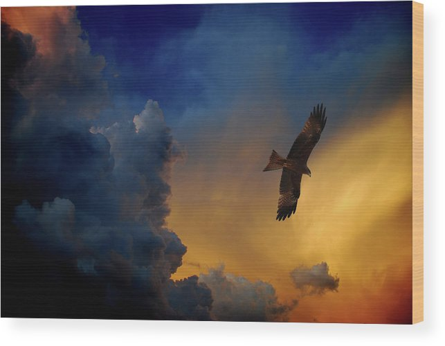 Animal Themes Wood Print featuring the photograph Eagle Over The Top by Gopan G Nair