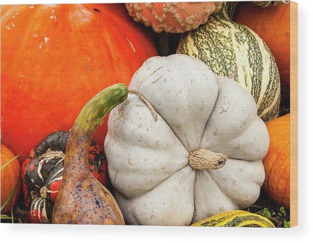 Season Wood Print featuring the photograph Fall Season Squash And Pumpkins by M Timothy O'keefe