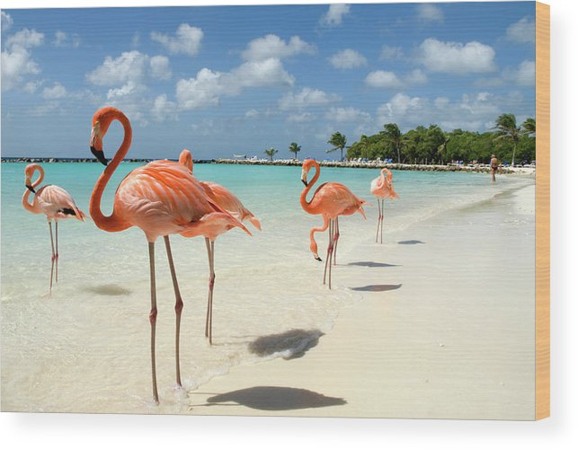 Shadow Wood Print featuring the photograph Flamingos On The Beach by Vanwyckexpress