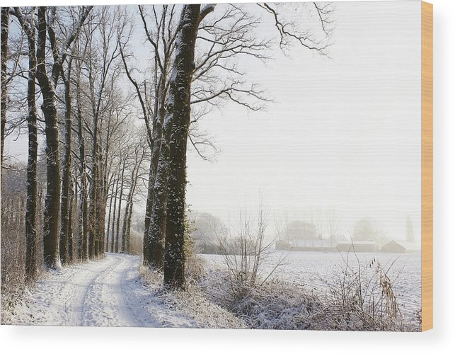 Tranquility Wood Print featuring the photograph Half Black, Half White by Bob Van Den Berg Photography