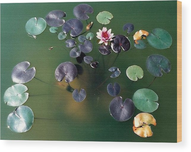 1980-1989 Wood Print featuring the photograph Lillypad by Margherita Wohletz