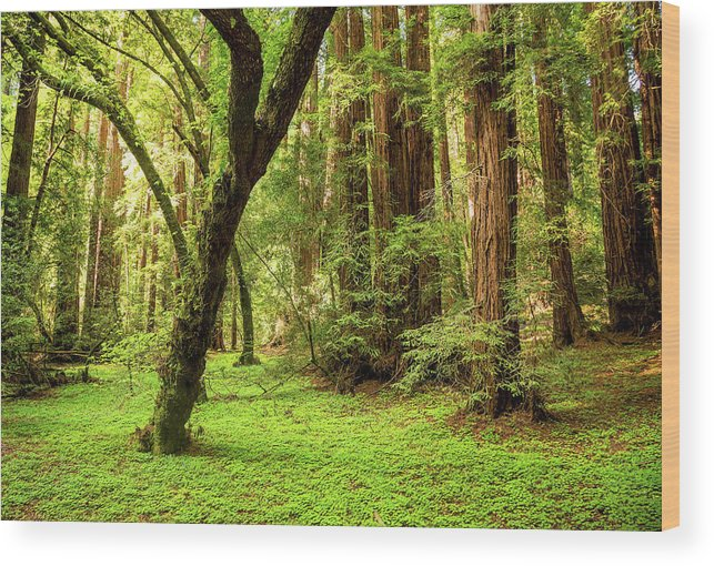 Tranquility Wood Print featuring the photograph Muir Woods Forest by By Ryan Fernandez