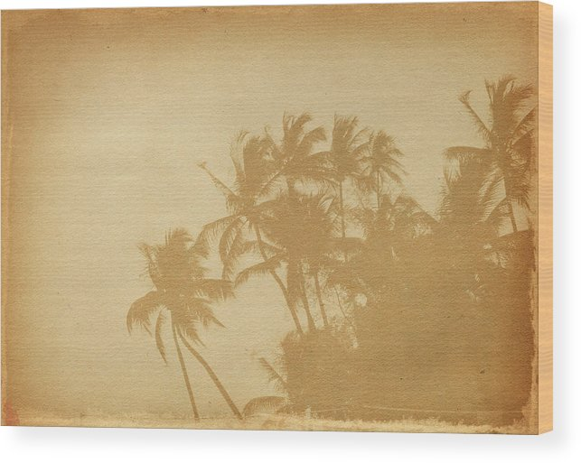 Aging Process Wood Print featuring the photograph Palm Paper by Nic taylor