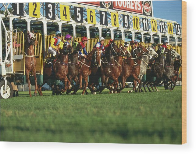 Horse Wood Print featuring the photograph Start Of Horse Race, Sydney, New South by Oliver Strewe