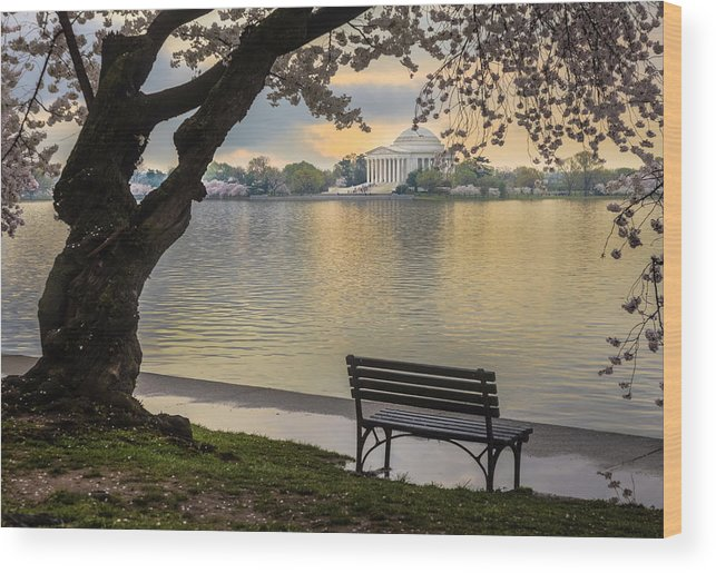 Tidal Basin Wood Print featuring the photograph Tidal Basin With Cherry Blossoms And by Drnadig
