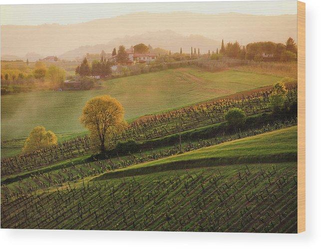 Scenics Wood Print featuring the photograph Tuscan Vinyards by John And Tina Reid