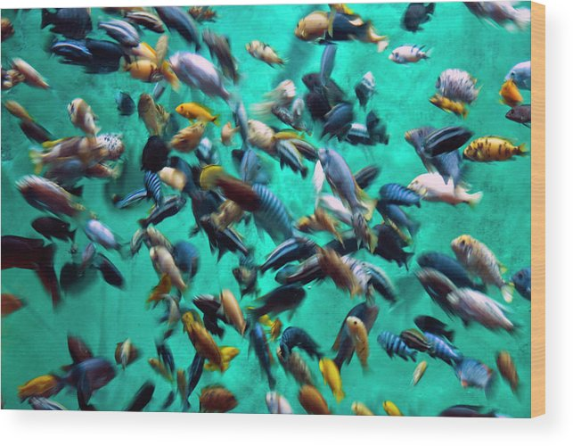 Underwater Wood Print featuring the photograph Various Multi-colored African Fish by By Ken Ilio