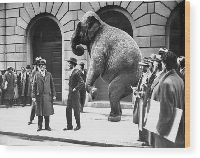 1930-1939 Wood Print featuring the photograph Victory, The G.o.p. Elephant, Stands In by New York Daily News Archive