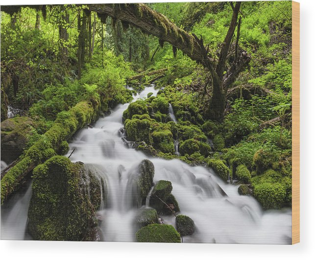 Scenics Wood Print featuring the photograph Wild Forest Waterfall Idyllic Green by Fotovoyager