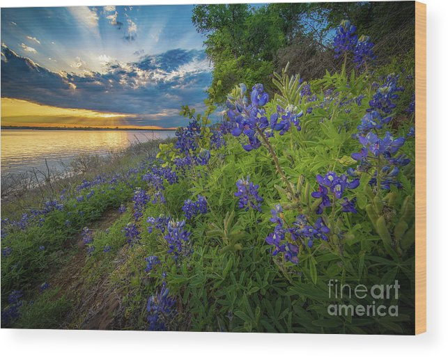 America Wood Print featuring the photograph Heavenly Flower Mound by Inge Johnsson