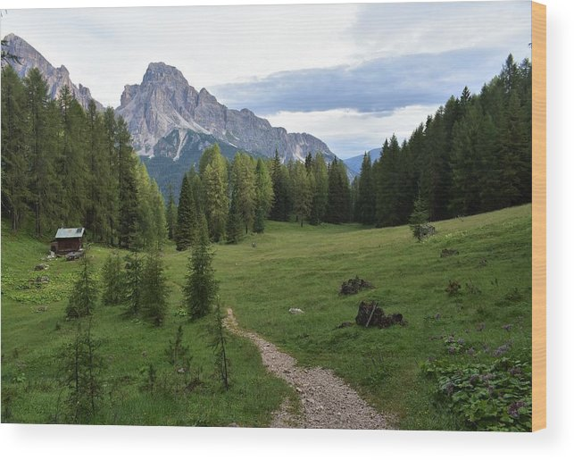 Dolomites Wood Print featuring the photograph Meadow in the dolomites by Luca Lautenschlaeger