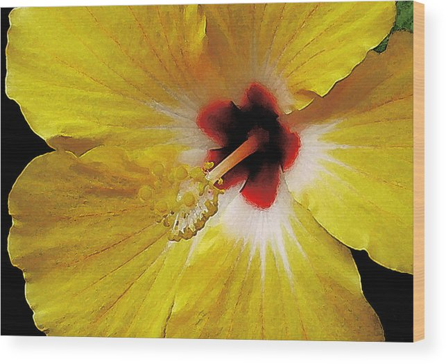 Hawaii Iphone Cases Wood Print featuring the photograph Yellow Hibiscus With Red Center by James Temple