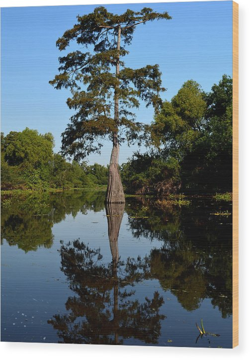 Bayou Wood Print featuring the photograph Bayou Reflections by Maggy Marsh