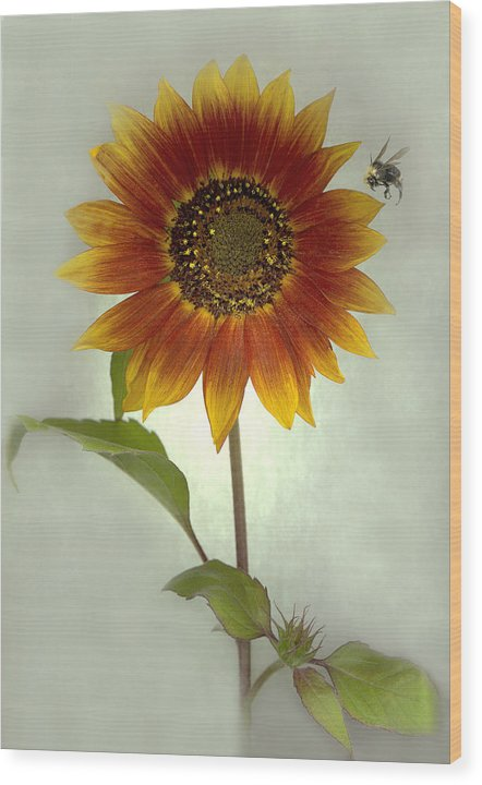 Sunflower Wood Print featuring the mixed media Sunflower And Bee by Sandi F Hutchins