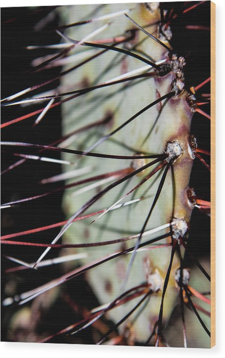 Lajitas Wood Print featuring the photograph Lajitas Cactus No. 2 by Al White