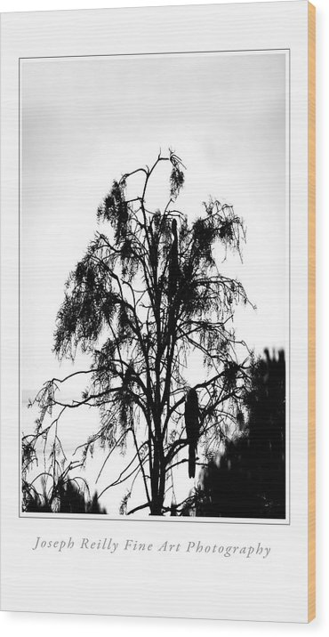 Wood Print featuring the photograph Winter Sky Wood Storks by Joseph Reilly