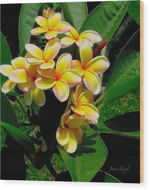 Summertime In Hawaii Wood Print featuring the photograph Summertime In Hawaii by James Temple