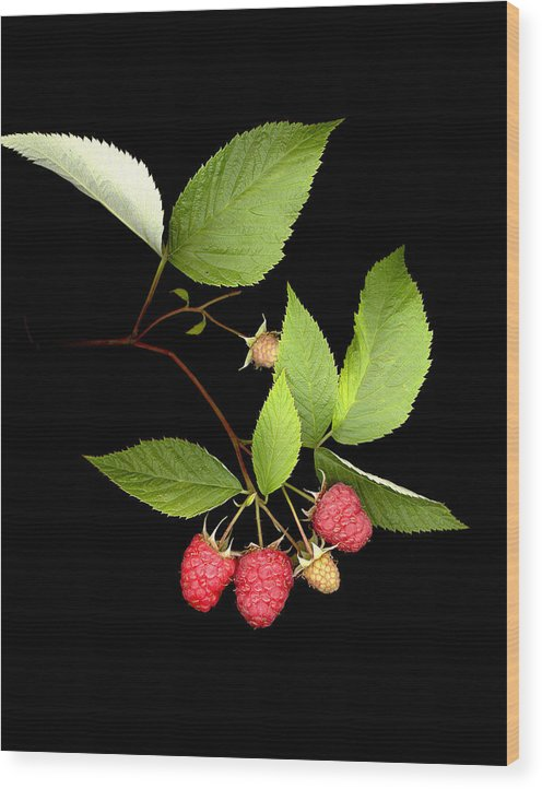 Red Raspberry Wood Print featuring the photograph Raspberry by Sandi F Hutchins